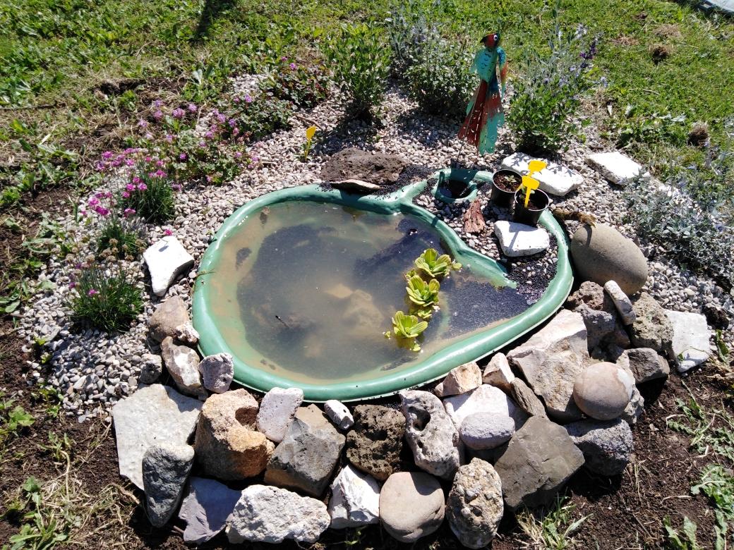 Piante Basse Da Aiuola il mio piccolo stagno | imparardinaggio come realizzare uno