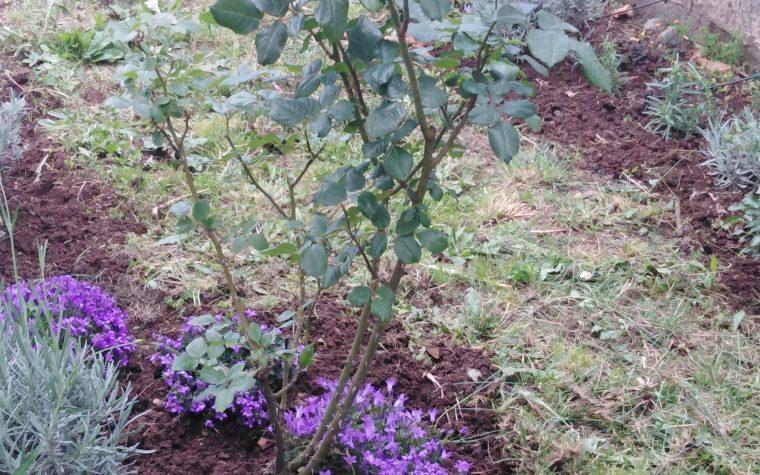 Combattere gli afidi sulle piante