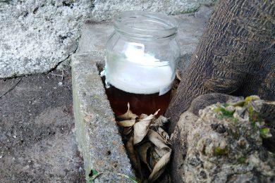 Trappole per lumache con la birra